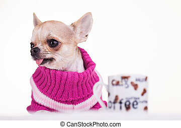 Little dog dressed in pink wool with a cup of coffee