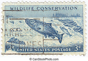 USA - CIRCA 1950 : stamp printed in USA with King Salmon in...