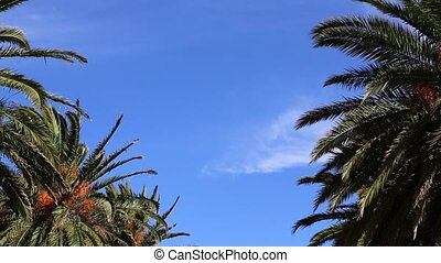Blue sky and palms background