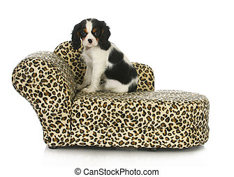 dog sitting on a dog bed - cavalier king charles spaniel...