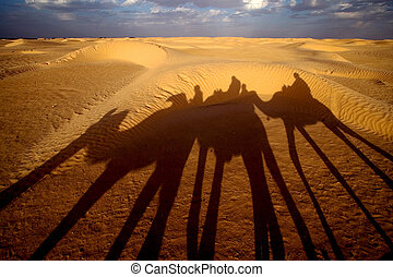 douze,tunisia,camel and people in the saharas desert