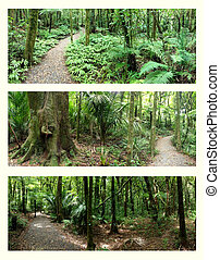 Rain forests - Four assorted views of rain forest