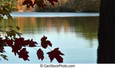 autumn lake water