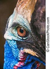 Cassowary eye - Close up of Cassowary head shot closeup,...