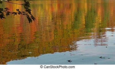 autumn lake reflection - Gorgeous fall color reflected on...