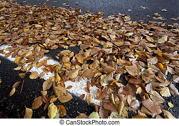 Dried leaves - Dry leaves in a forest in autumn