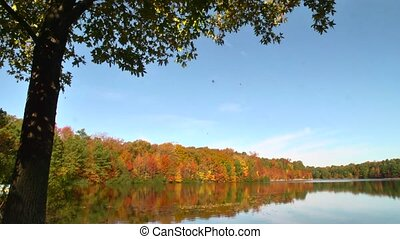 falling leaves on lake - The camera tilts down to follow...