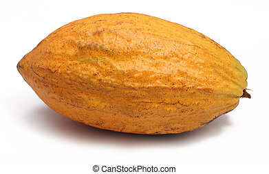 Cacao pod - A fresh cacao pods isolated on a white...