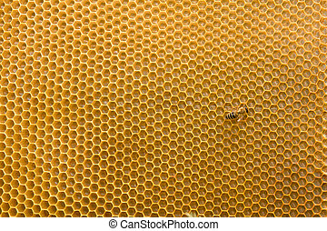 Honeycomb with honey and bee