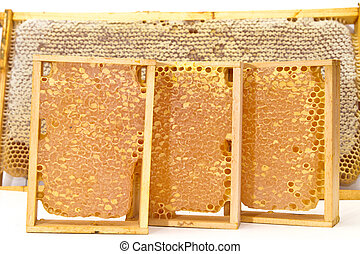 Honeycombs with honey. Picture on white background.