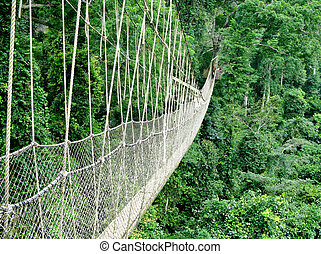 Walkway in rain forest - Rope walkway through the treetops...