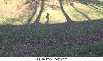 videographers shadow on tree