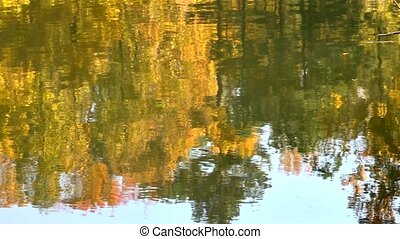 fall lake reflection - Cropped to only include the...