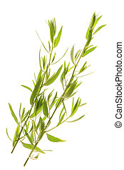 fresh twigs of tarragon - freshly picked twigs of tarragon...