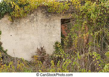 Abandoned facade with open door under wild vegetation