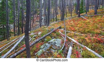Lewis and Clark National Forest - Bright autumn colors in...