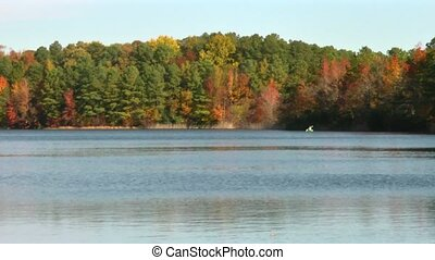 autumn kayak - A pretty fall scene of a tree lined lake...