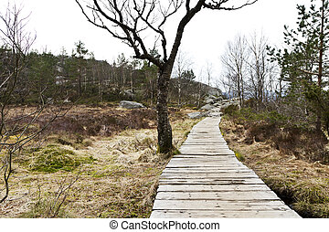 wooden foot path in rural landscape in norway
