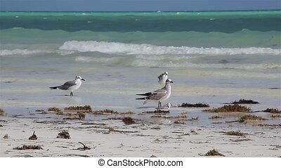 Sea-gulls on the coast of ocean.