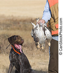 Dog and Grouse - Dog with Sharptailed Grouse