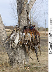 Pheasants and Grouse - GameStrap of Pheasants and...
