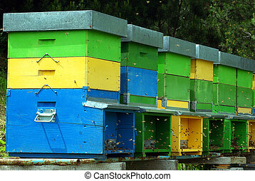 Beehives - Close-up on colorful beehives in the Alps