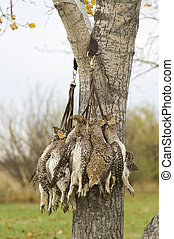 Sharptailed Grouse - Gamestrap of Sharptailed Grouse