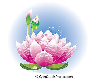 蓮花, 花