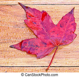 A maple leaf