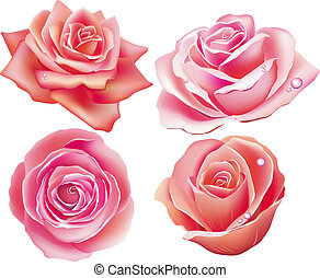 Set of four rose