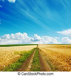 road in golden fields