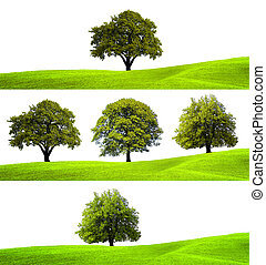 Collection of green trees