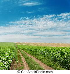 dirty road in green fields under blue sky