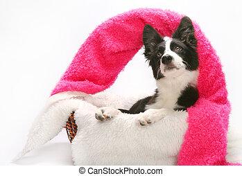 Sweet puppy in a basket