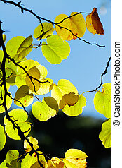 autumn leaves expressing the passage of time and the...
