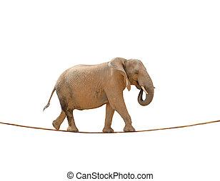 Elephant Walking On Rope On White Background