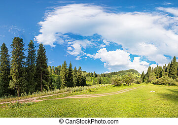 panorama of the forest and sky in the gorge in Almaty,...