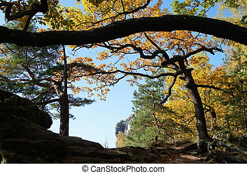 Deciduous trees in autumn - Colorful deciduous trees in Elbe...