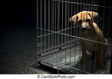 Please Free Me - A sad looking puppy wanted to come out from...
