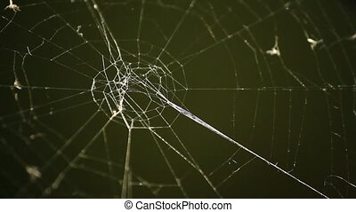 Cobweb against dark green background