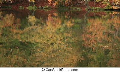 Seven Lakes - forest reflection on the lake at Seven Lakes...