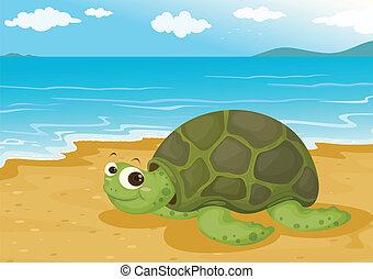 tortoise on sea shore - illustration of a tortoise on sea...