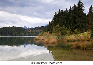 forest and wild lake