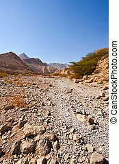 Riverbed - Canyon in the Judean Desert on the West Bank of...