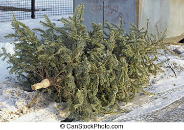 Christmas is over. A Christmas tree is put down after the...