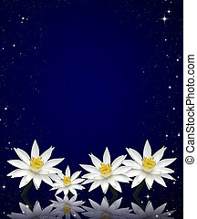 lotus white on night sky background