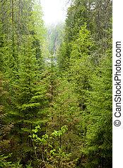 The vegetation of the Orthodox monastic island of Valaam....