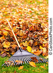Fall leaves with rake - Pile of fall leaves with fan rake on...
