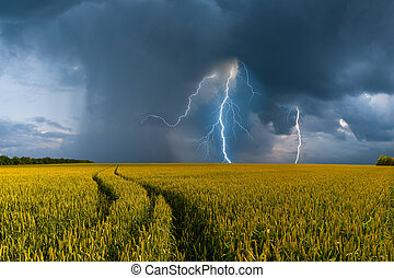 Big wheat field and thunderstorm - Summer landscape with big...
