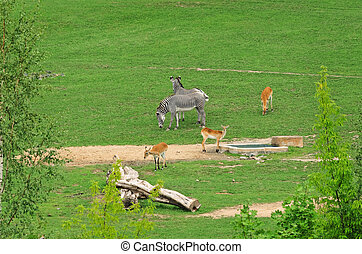 Hoofed Mammals - Group Of Hoofed Mammals On The Nature
